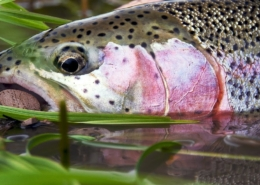 Alaska-Fly-Fishing-with-a-Mouse-Fly-Aniak-by-Todd-Moen