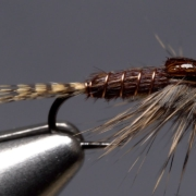 Phat-and-Phunky-Pheasant-Tail-Nymph