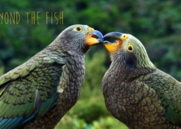 BEYOND-THE-FISH