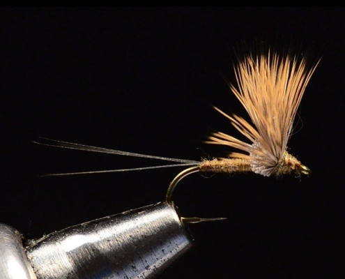 Comparadun-Fly-Tying-Tied-by-Charlie-Craven