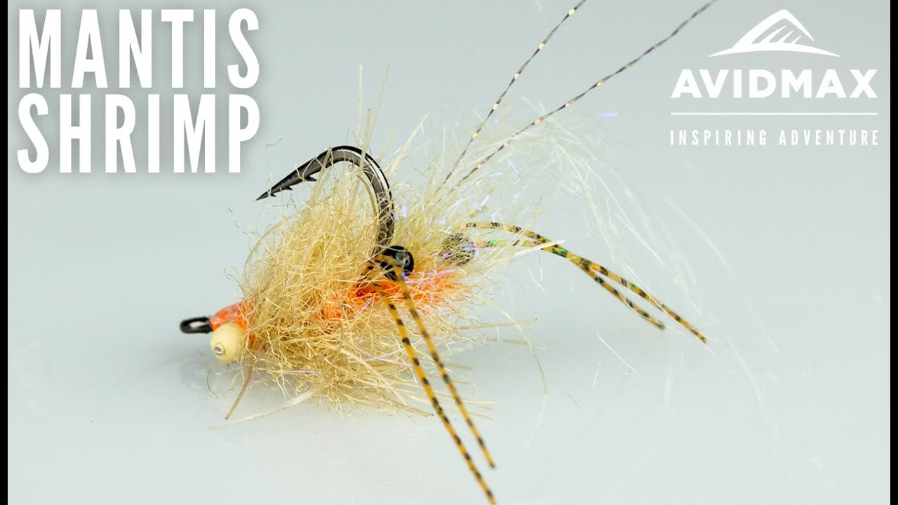 Ep-Spawning-Mantis-Shrimp-Saltwater-fly-tying