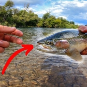 Secret-New-Fly-Slays-Trout