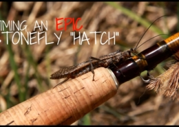 How-to-Predict-a-Stonefly-Hatch