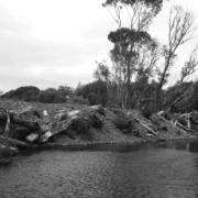 Kakapo-Brook-Symptomatic-of-the-Changing-South-Island