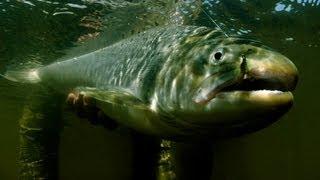 Las-Buitreras-Sea-Trout-Fishing