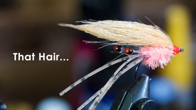 The-Presidential-Shrimp-Underwater-Footage-McFly-Angler-Fly-Tying-Tutorials