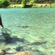 Fly-Fishing-NZ.-Big-river-big-fish-from-NelsonMarlborough