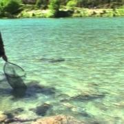 Fly-Fishing-NZ.-Big-river-big-fish-from-NelsonMarlborough
