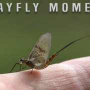 A-Mayfly-Moment