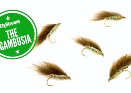 FlyStream-Effective-Flies-27-The-Gambusia