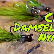 CDC-Damselfly-nymph