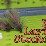 Egg-Laying-Stonefly