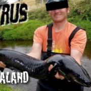 Ein-AAL-auf-FLIEGE-Fliegenfischen-Neuseeland-2