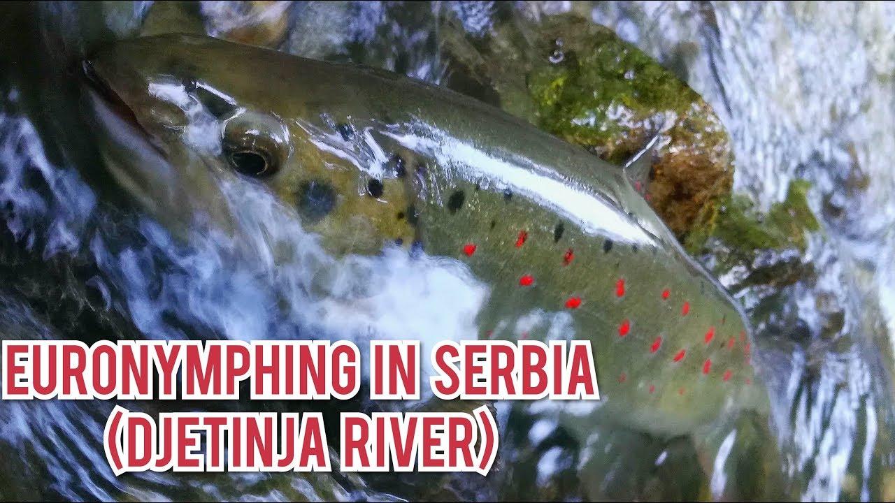Euronymphing-in-Djetinja-2019