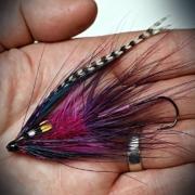 Purple-Intruder-Tube-Fly