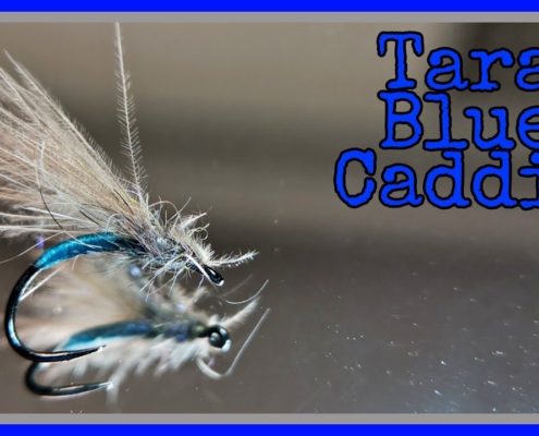 Tara-Blue-Caddis