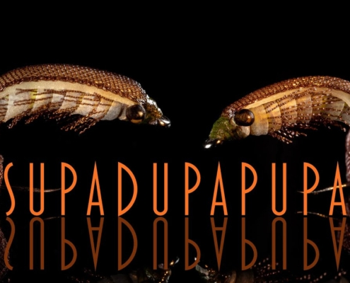 The-SUPADUPAPUPA-tying-and-fishing-versatile-river-and-stillwater-pattern
