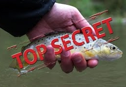 Catching-wild-Brown-Trout-on-a-Southern-chalk-Stream
