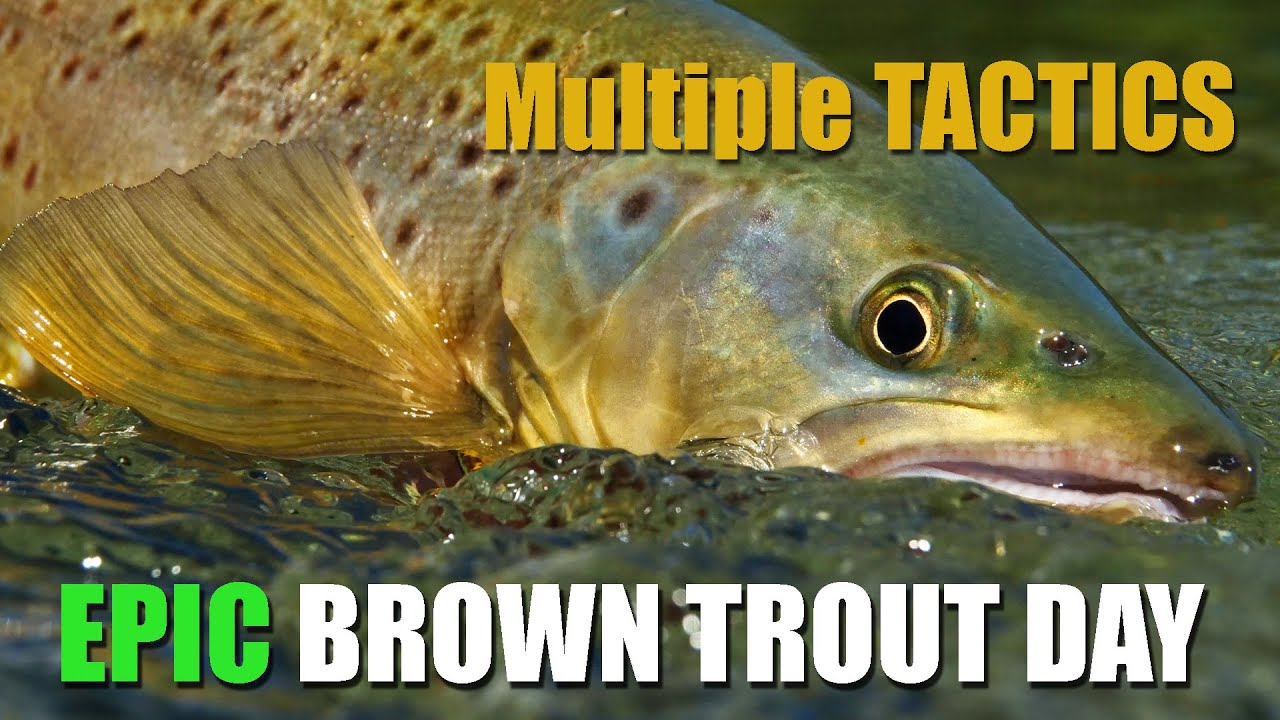 As-It-Happens-Multiple-Tactics-on-an-Epic-Brown-Trout-Afternoon