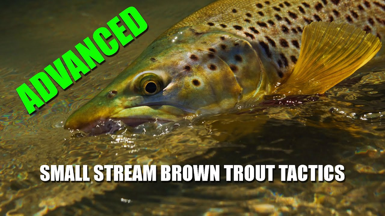 As-It-Happens-S02E01-Fly-Fishing-Brown-Trout-in-small-streams-at-Maruia-Part-1