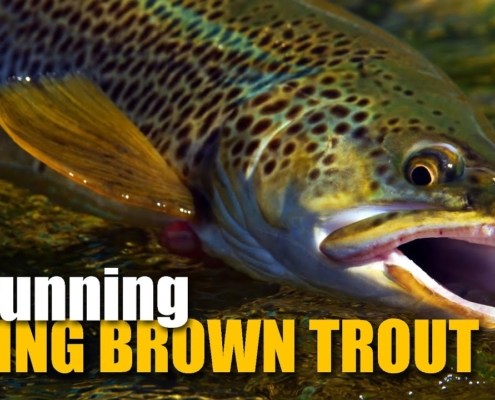 Dry-Fly-Fishing-for-2-LARGE-RISING-brown-trout
