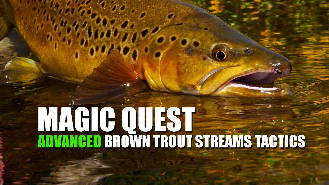 Fly-Fishing-Brown-Trout-in-small-streams-at-Maruia-Magic-Quest