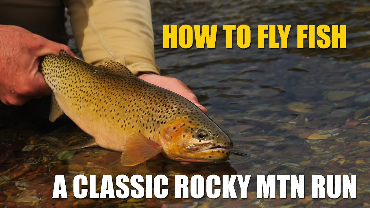 How-to-Fly-Fish-A-Classic-Rocky-Mountain-Run