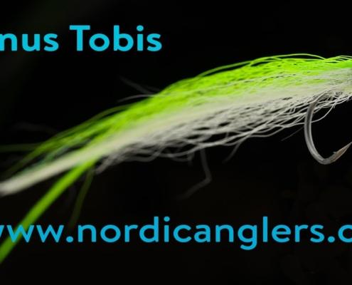 Kystflue-havoerred-fluebinding-Janus-flatwing-Tobis