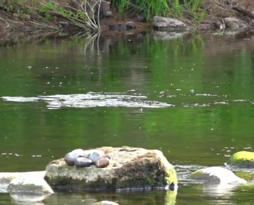 River-Ayr-in-Scotland-Footage-from-May-2020