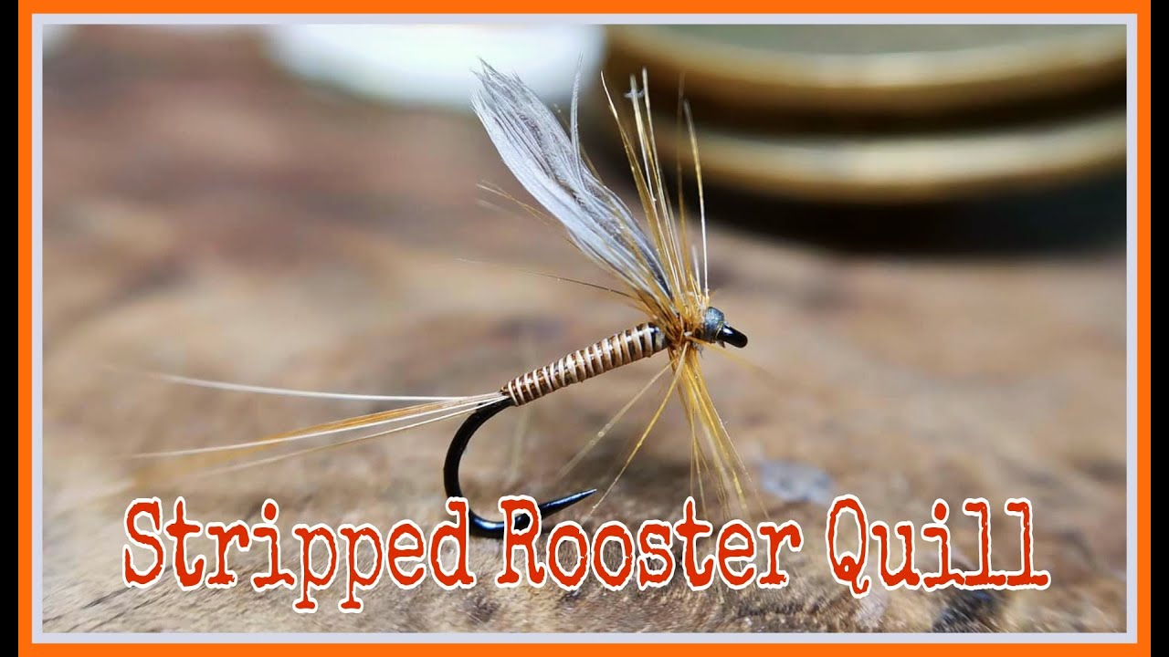 Stripped-Rooster-Quill