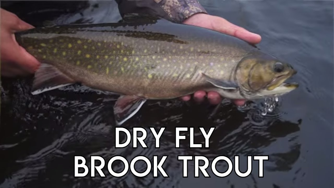 Crooks-Lake-Dry-Fly-Brook-Trout-Labrador-Fly-Fishing