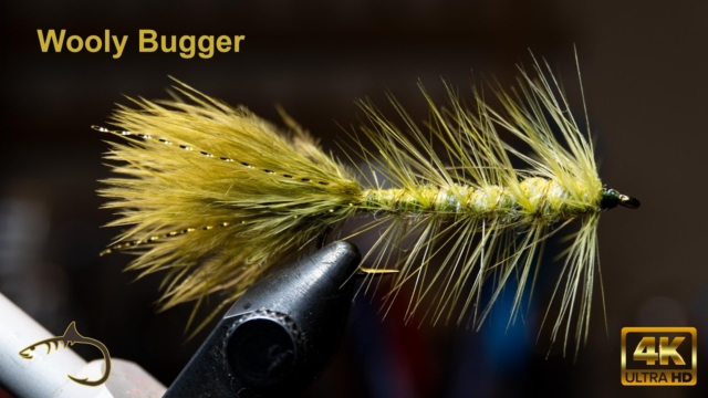 Wooly-Bugger-Small-Dubbed-Body-with-Chickabou-tail-McFly-Anger-Fly-Tying-Session