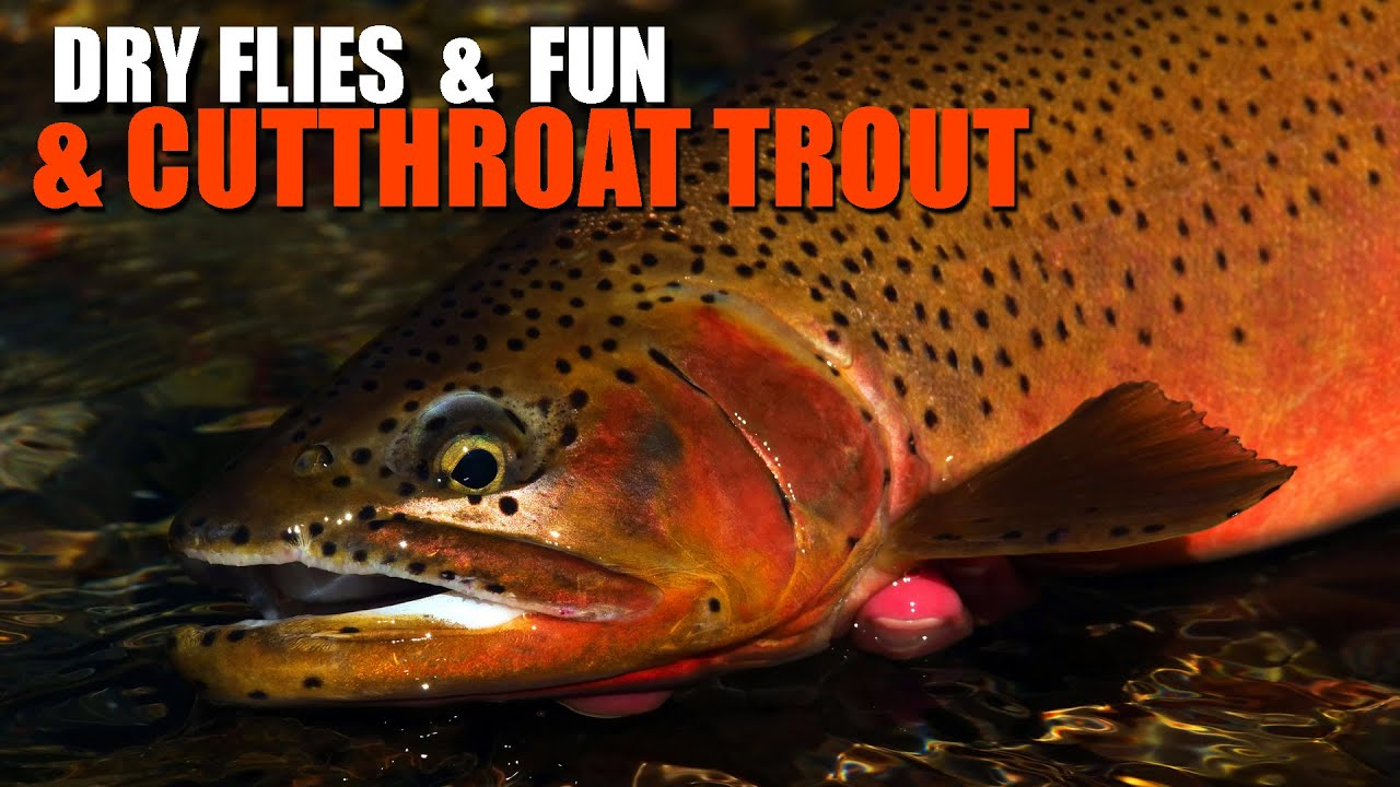 Dry-Flies.-Fun.-And-Cutthroat-Trout