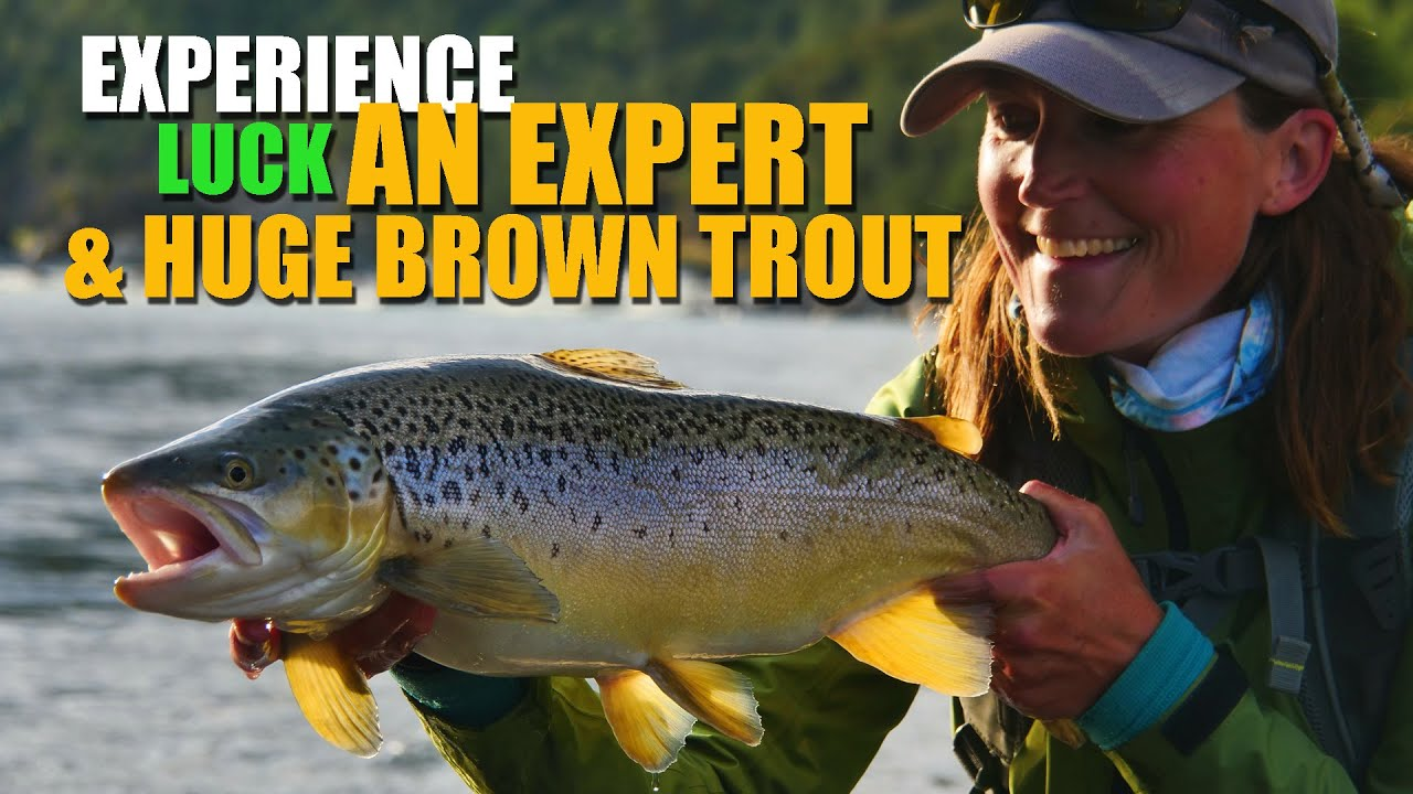 Experience-an-Expert-Huge-Brown-Trout-Luck