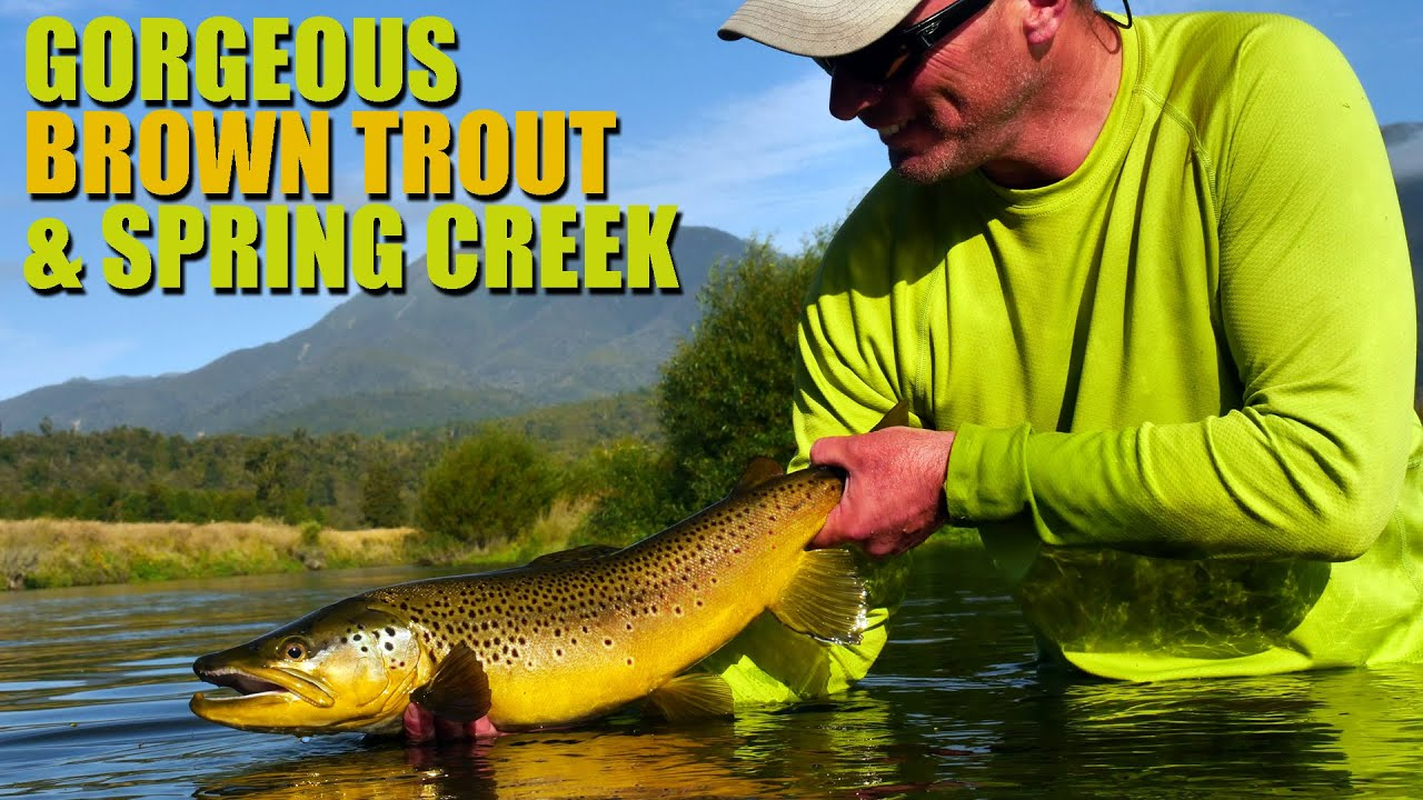 Fly-Fishing-Spring-Creek-Epic-HUGE-BROWN-TROUT-in-gin-clear-water