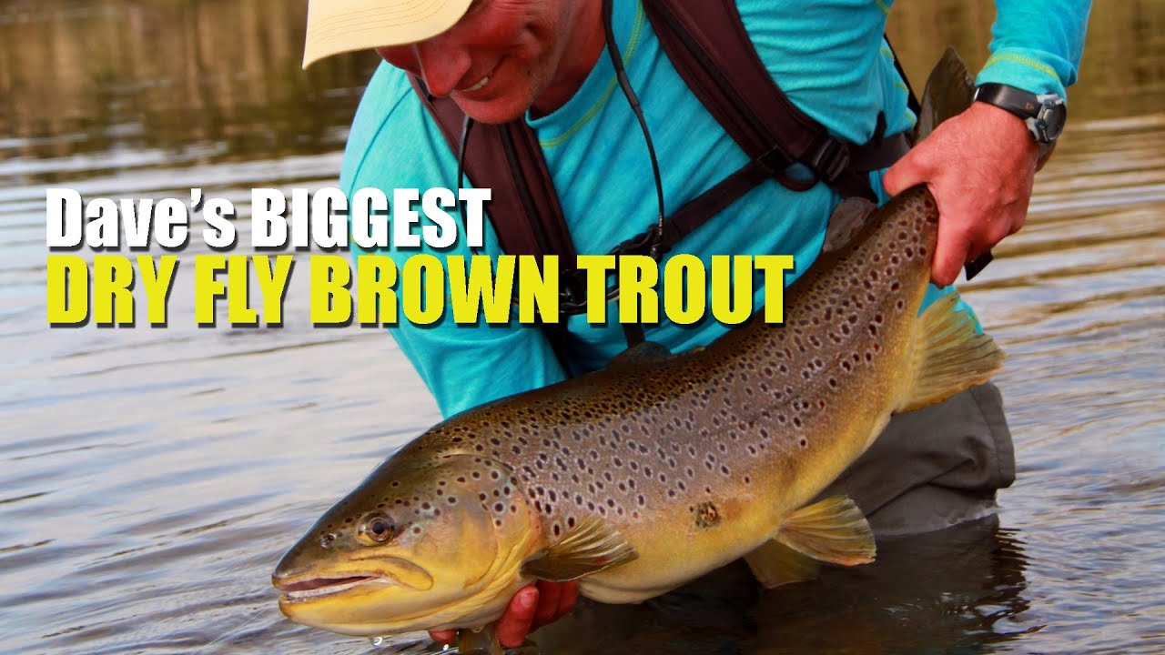 16-to-20lb-Brown-Trout-on-a-Dry-Fly