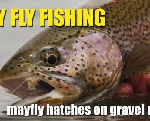 Dry-Fly-Fishing-During-A-Mayfly-Hatch