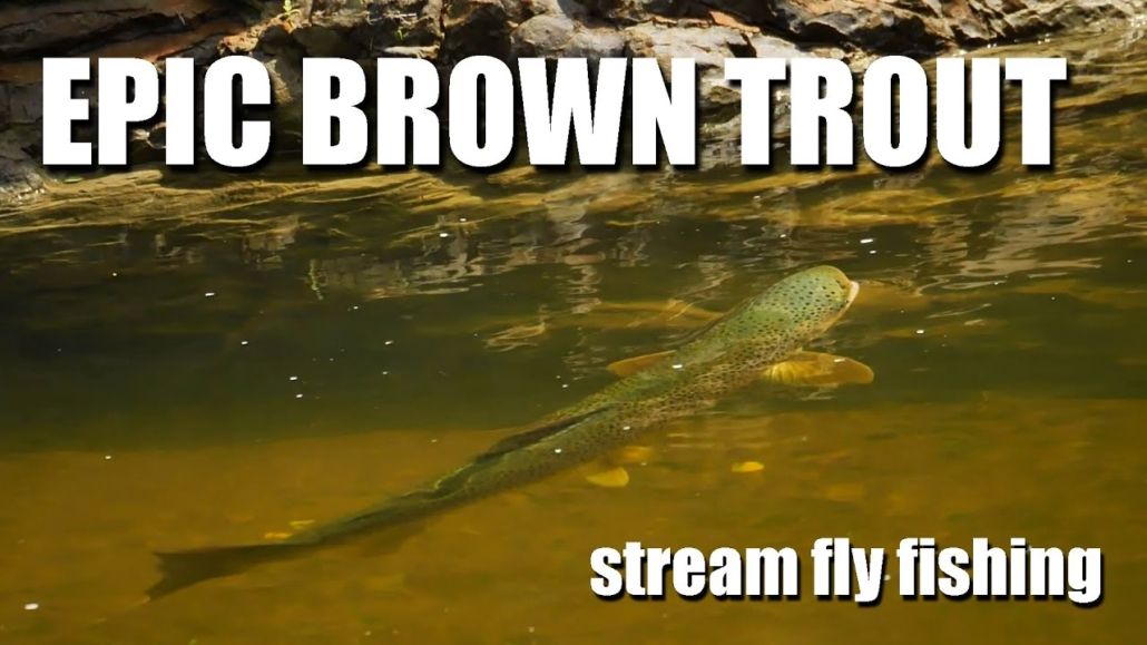 Fly-Fishing-HUGE-BROWN-TROUT-in-tiny-water.-The-art-of-hunting-brown-trout-EPIC