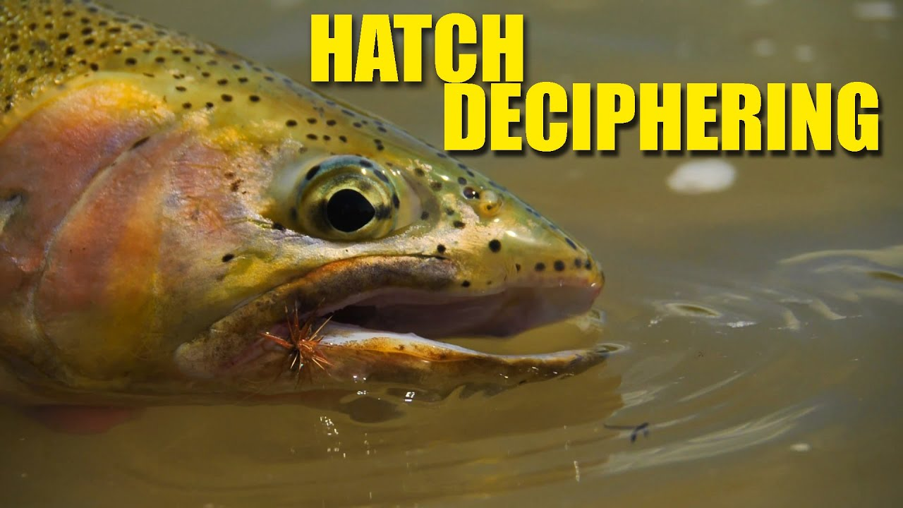 How-To-Decipher-the-Hatch-Trout-Are-Targeting