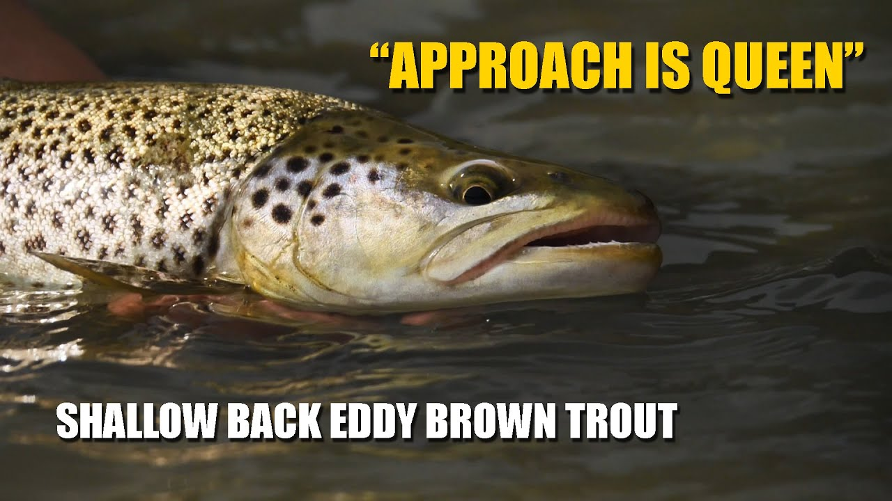 How-To-Fly-Fish-Trout-Streams-How-to-Approach-a-Shallow-Back-Eddy-Brown-Trout
