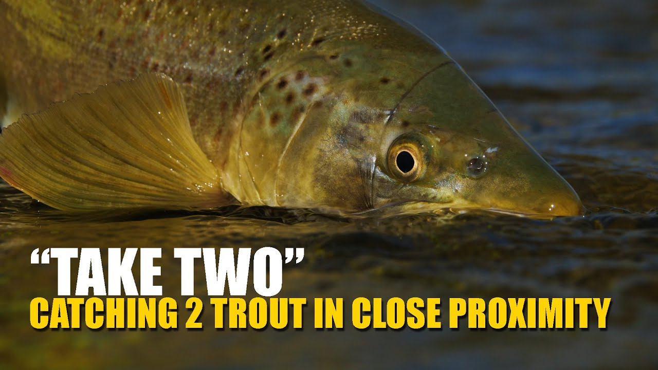How-To-Fly-Fish-Trout-Streams-How-to-Catch-amp-Land-2-Trout-Feeding-in-Close-Proximity