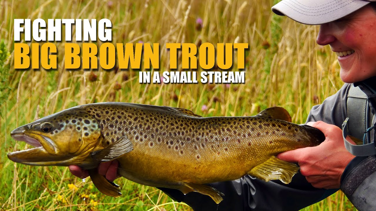 How-To-Fly-Fish-Trout-Streams-How-to-Fight-BIG-Brown-Trout-in-a-Small-Stream