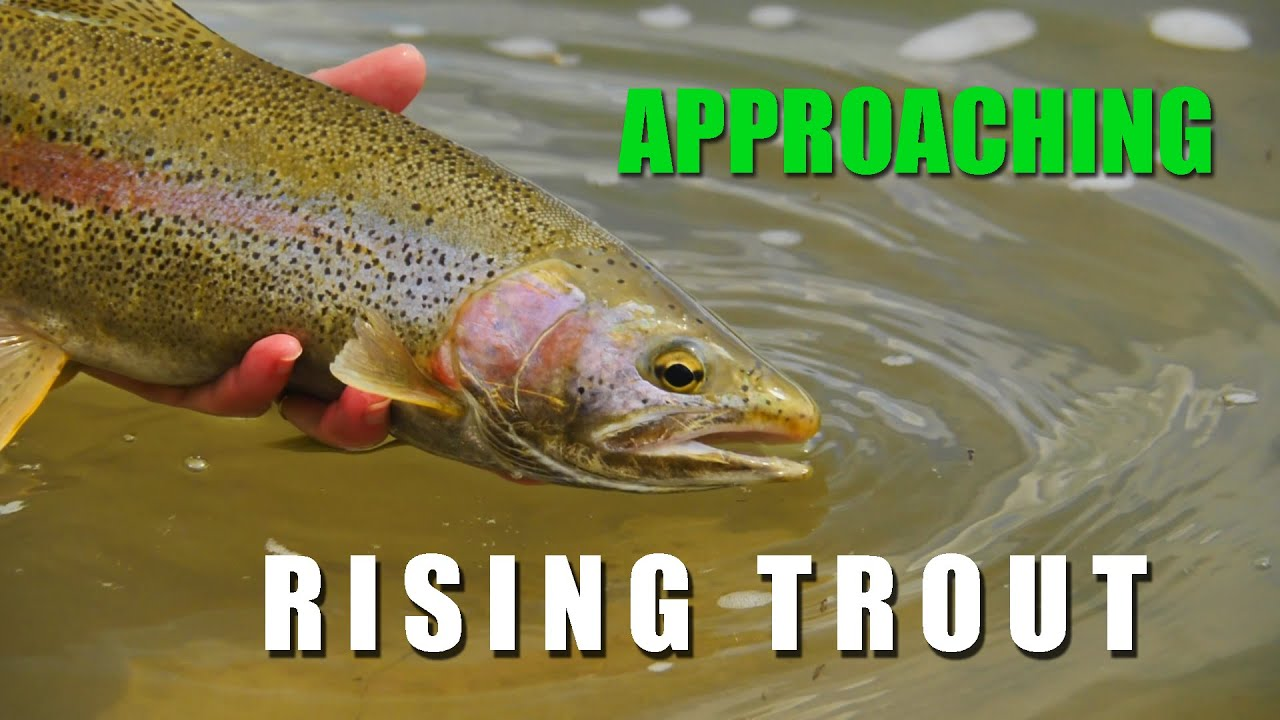 How-to-Approach-Rising-Trout