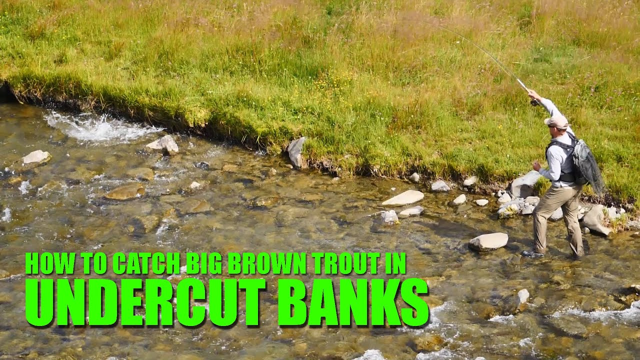 How-to-Find-and-Fly-Fish-Brown-Trout-in-Shallow-Undercut-Banks