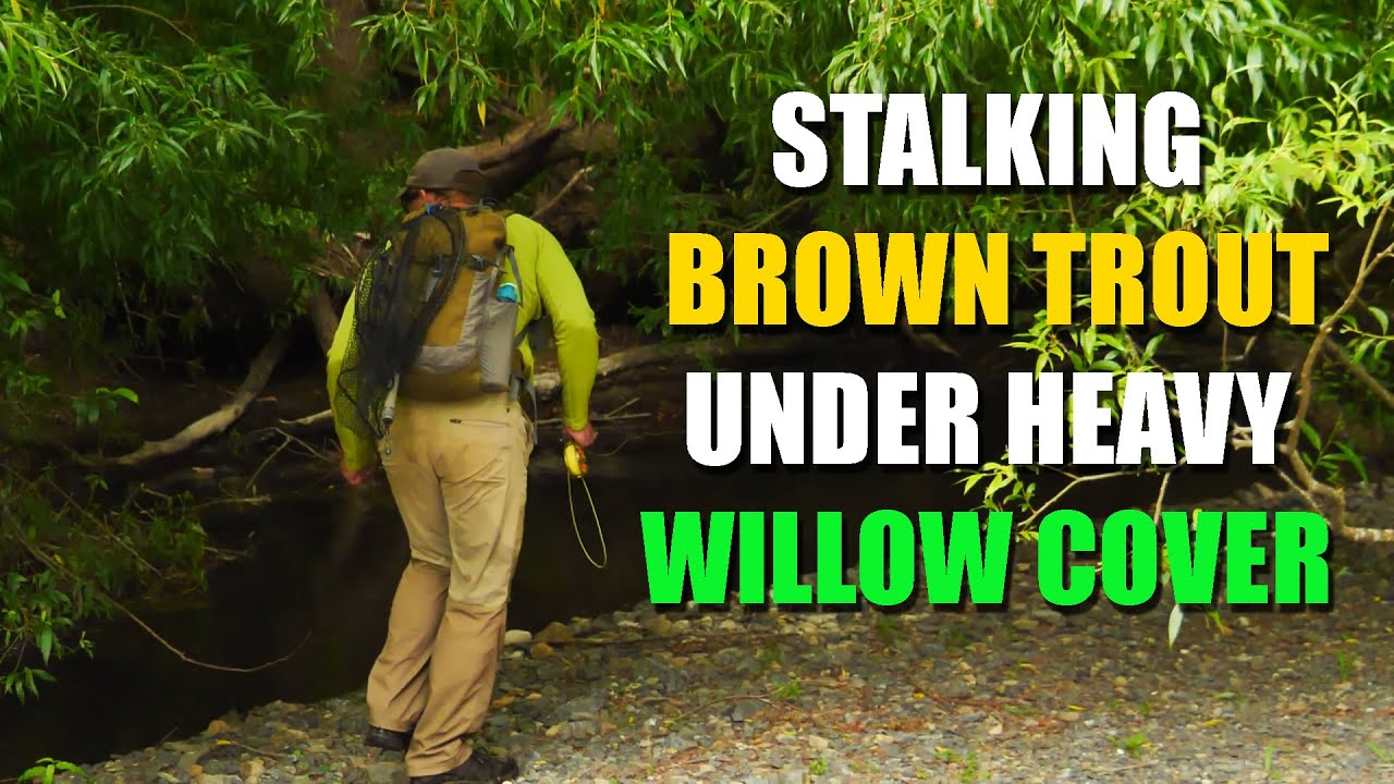 How-to-Fly-Fish-Trout-Streams-Tips-Tactics-amp-Discussion-quotStalking-Brown-Trout-Under-Willow-Coverquot