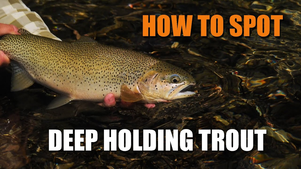 How-to-Spot-Deep-Holding-Trout-AKA-quotsmudge-huntquot