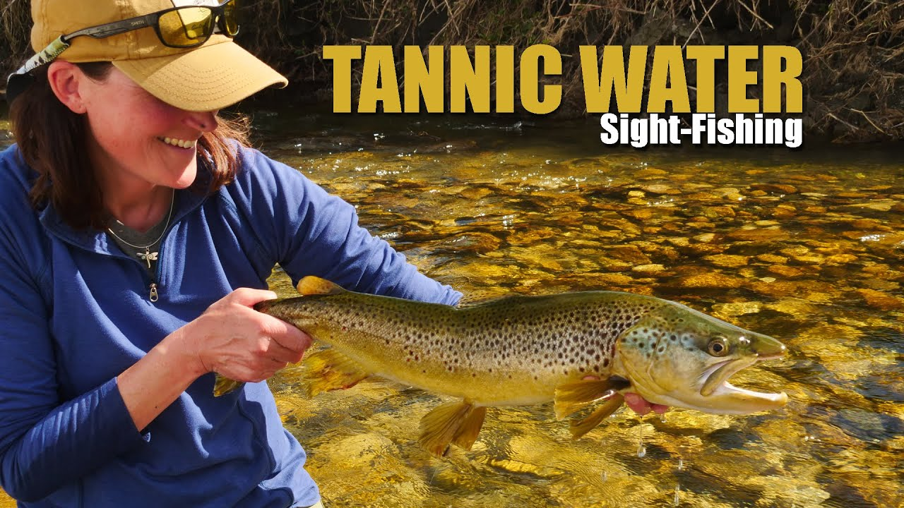 Sighting-Brown-Trout-in-Tannic-Water