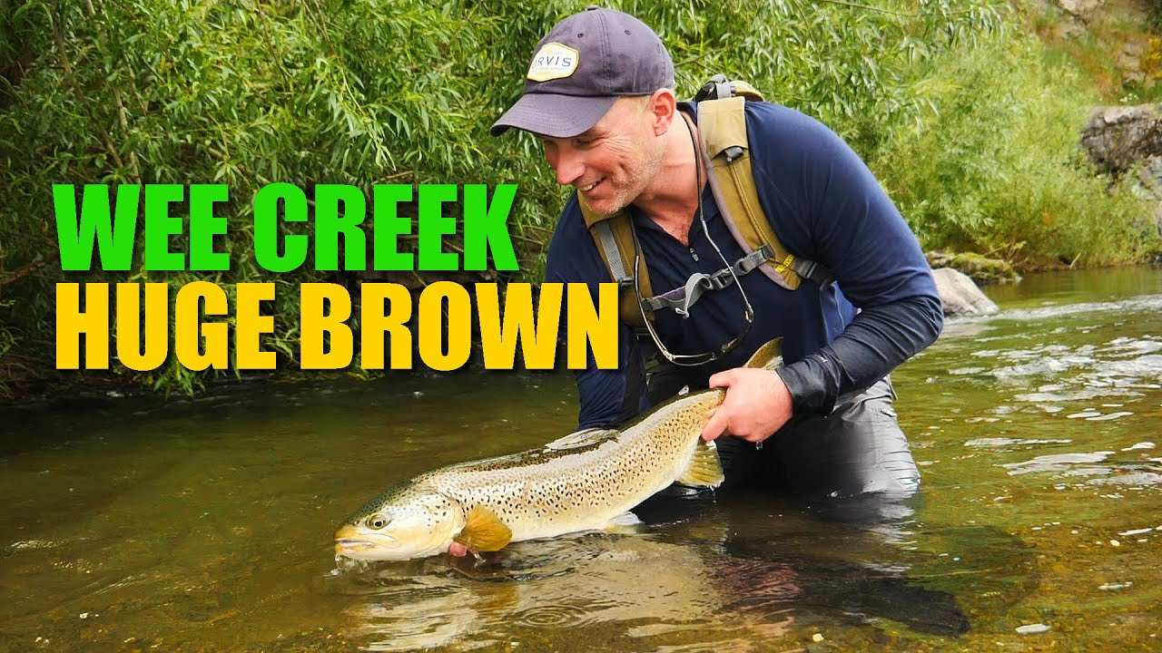 Wee-Creek.-Huge-Brown.-How-to-fight-a-huge-brown-in-a-tiny-creek