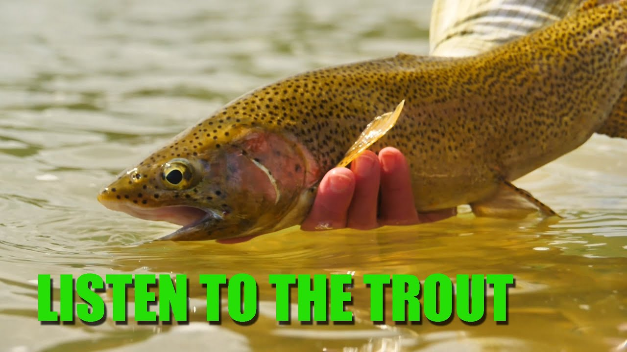 How-to-Listen-to-the-Trout