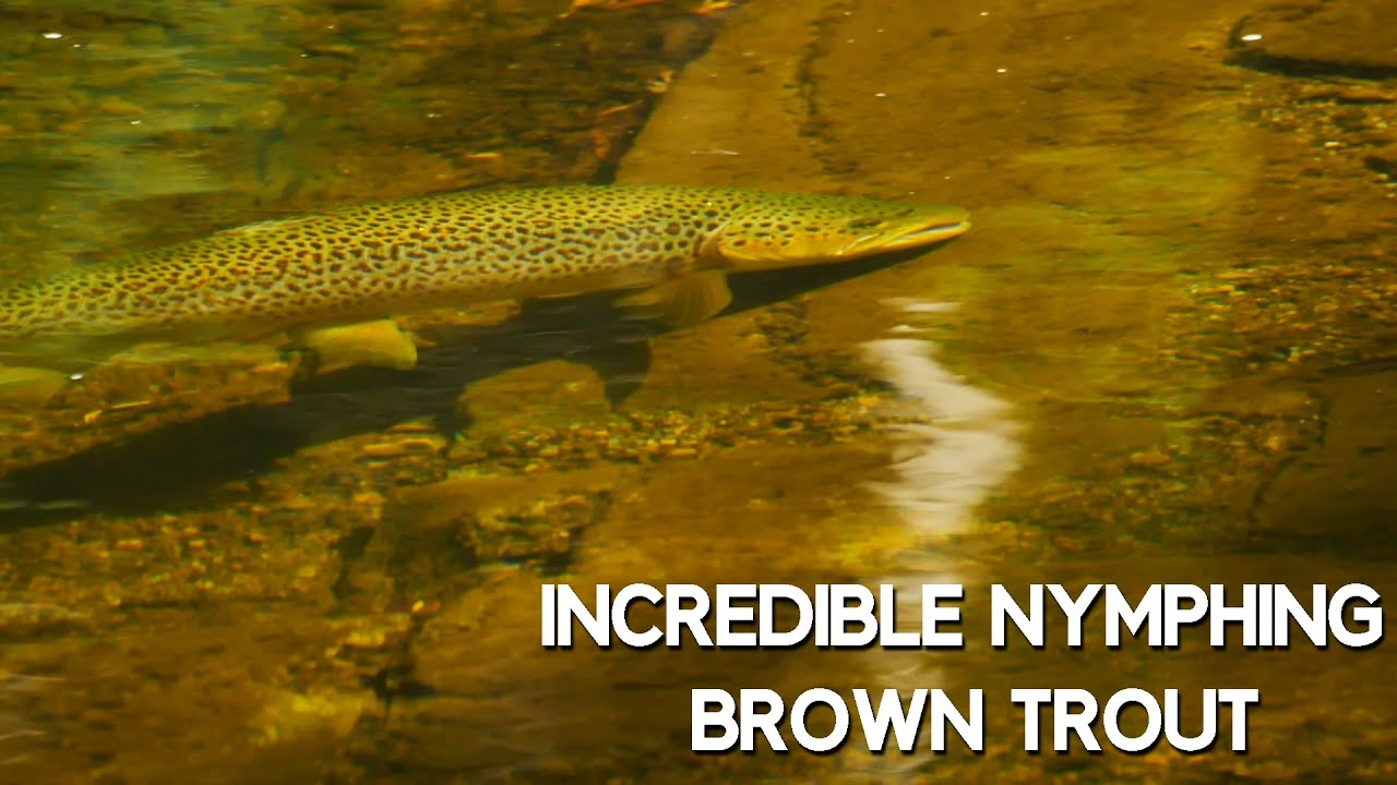 Obsessive-Brown-Trout-Fly-Fishing-Wonderful-Beautiful-Tedious-Fly-Fishing-in-Gin-Clear-Water